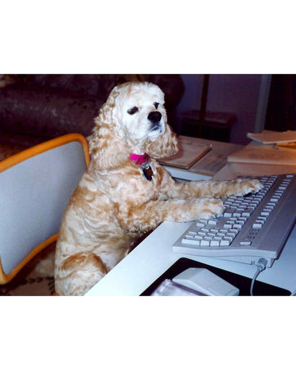 pets_katiepicks10_katie_typing.jpg