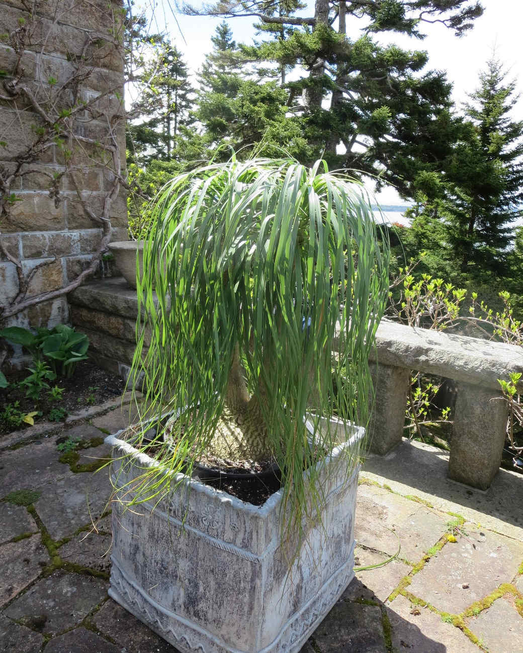 planting-urns-skylands-31-0514.jpg