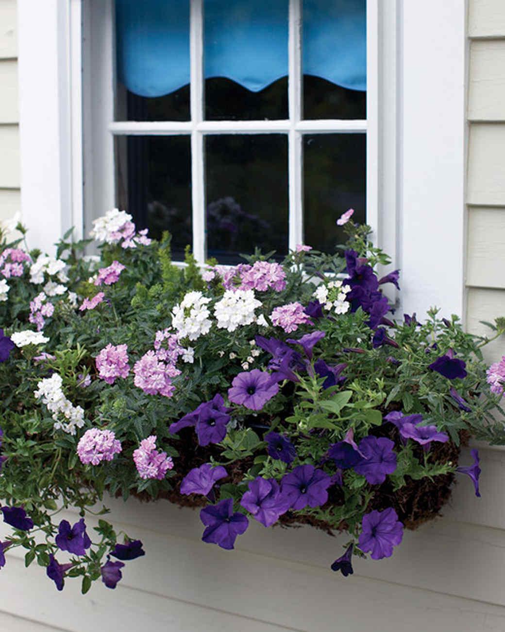 mld104318_0609_purple_windowbox.jpg