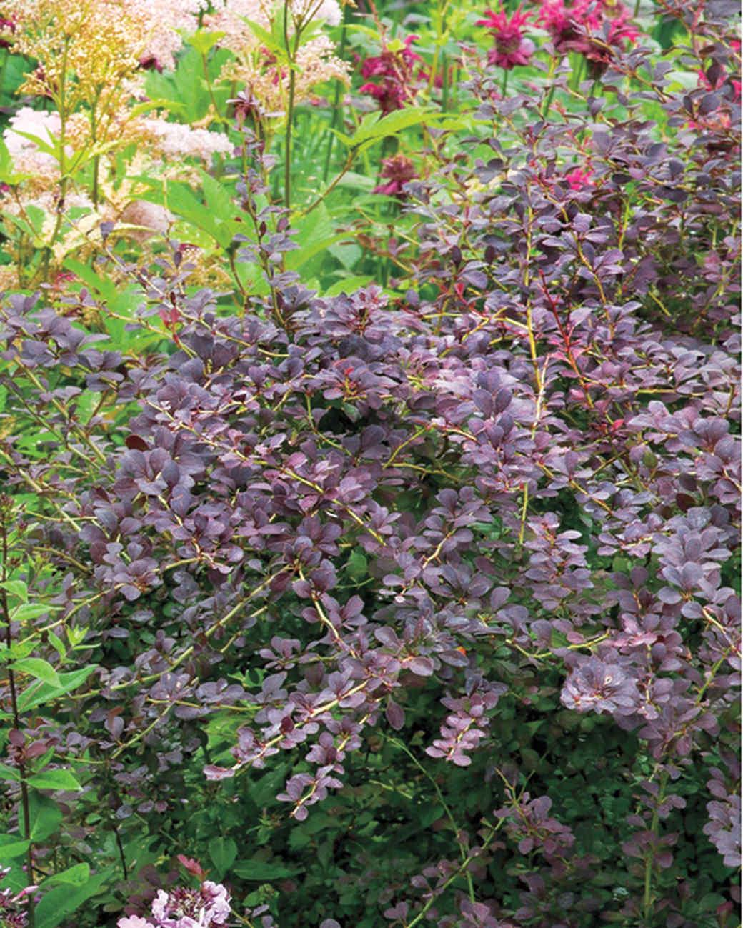 noble-garden-neutrals-mld106284.jpg