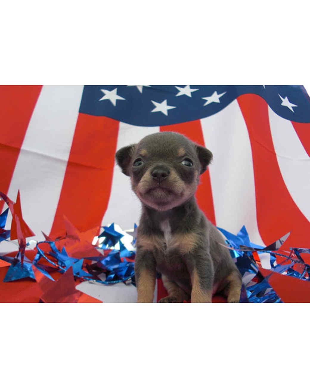 p_patriotic_10_9183289_10802354.jpg
