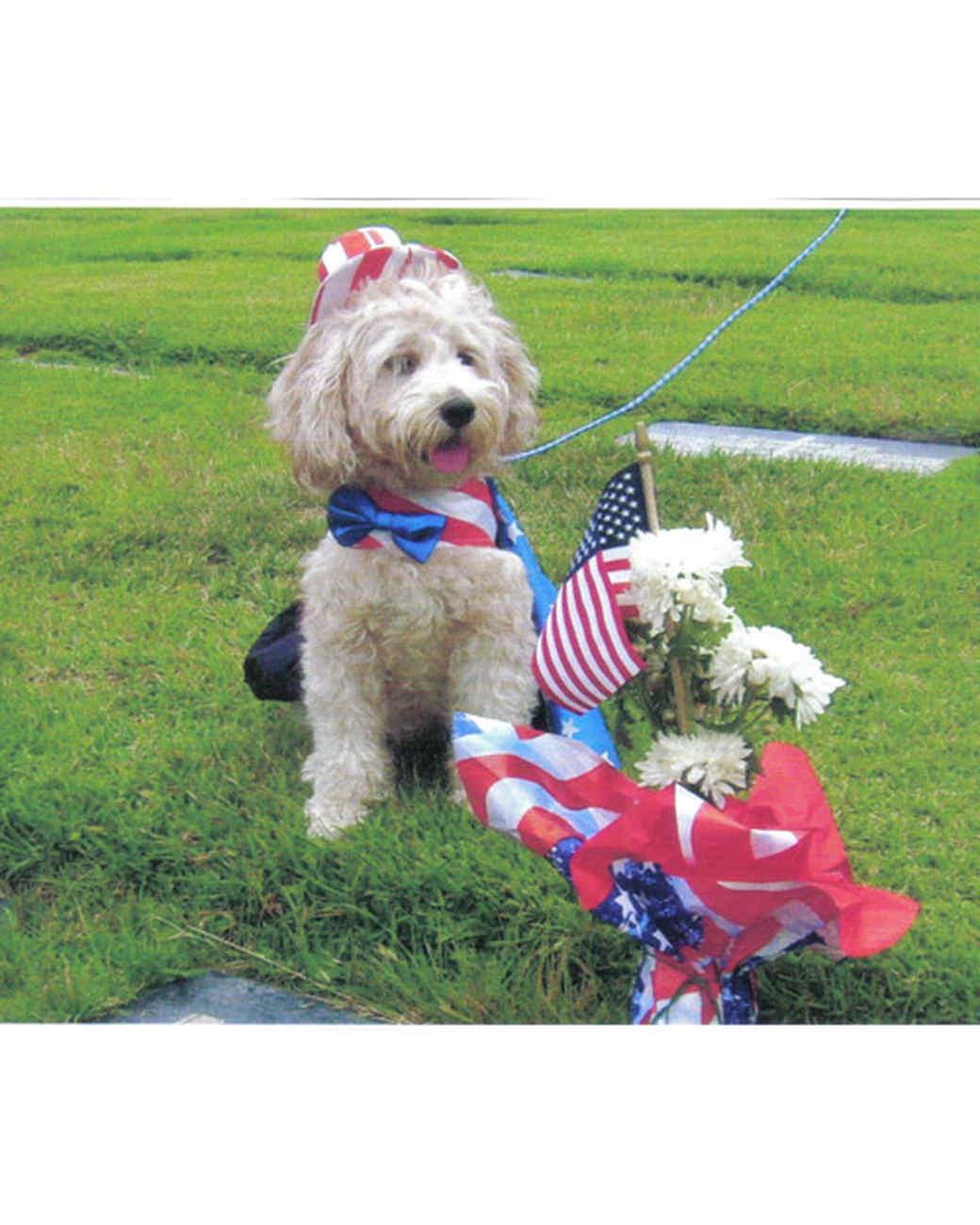 p_patriotic_10_9332403_10374653.jpg
