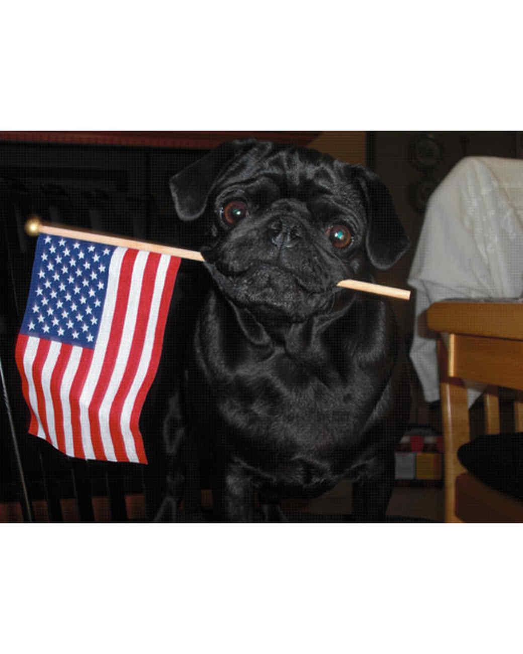 p_patriotic_10_9336443_20966015.jpg