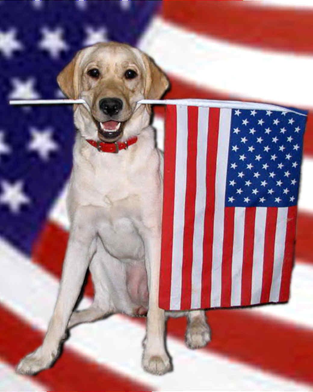 p_patriotic_10_9412446_11666275.jpg