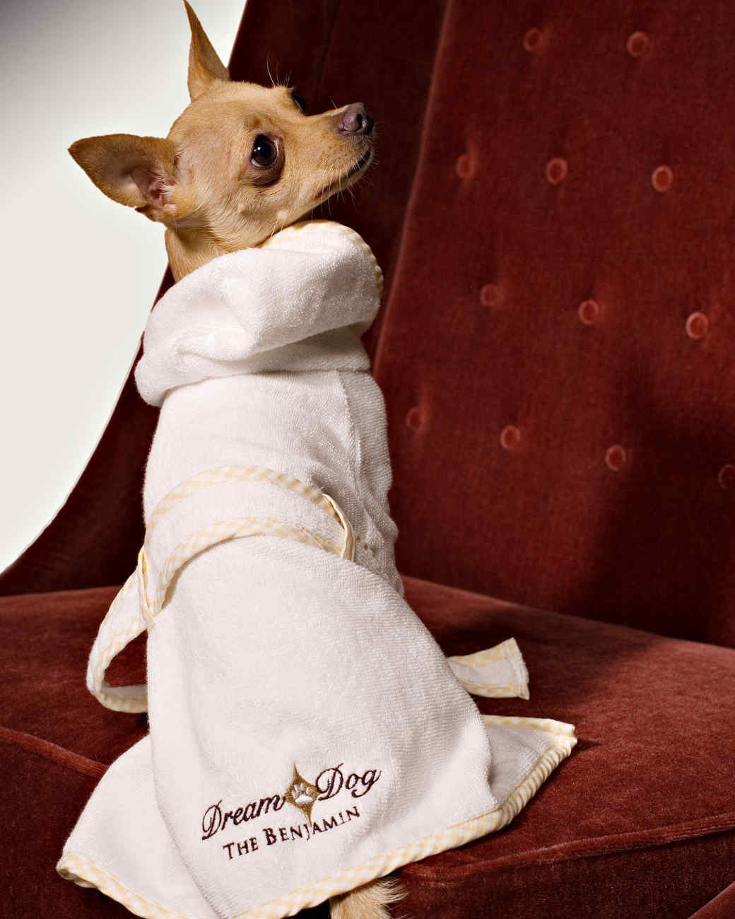 pet-hotels-msl0513-the-benjamin.jpg