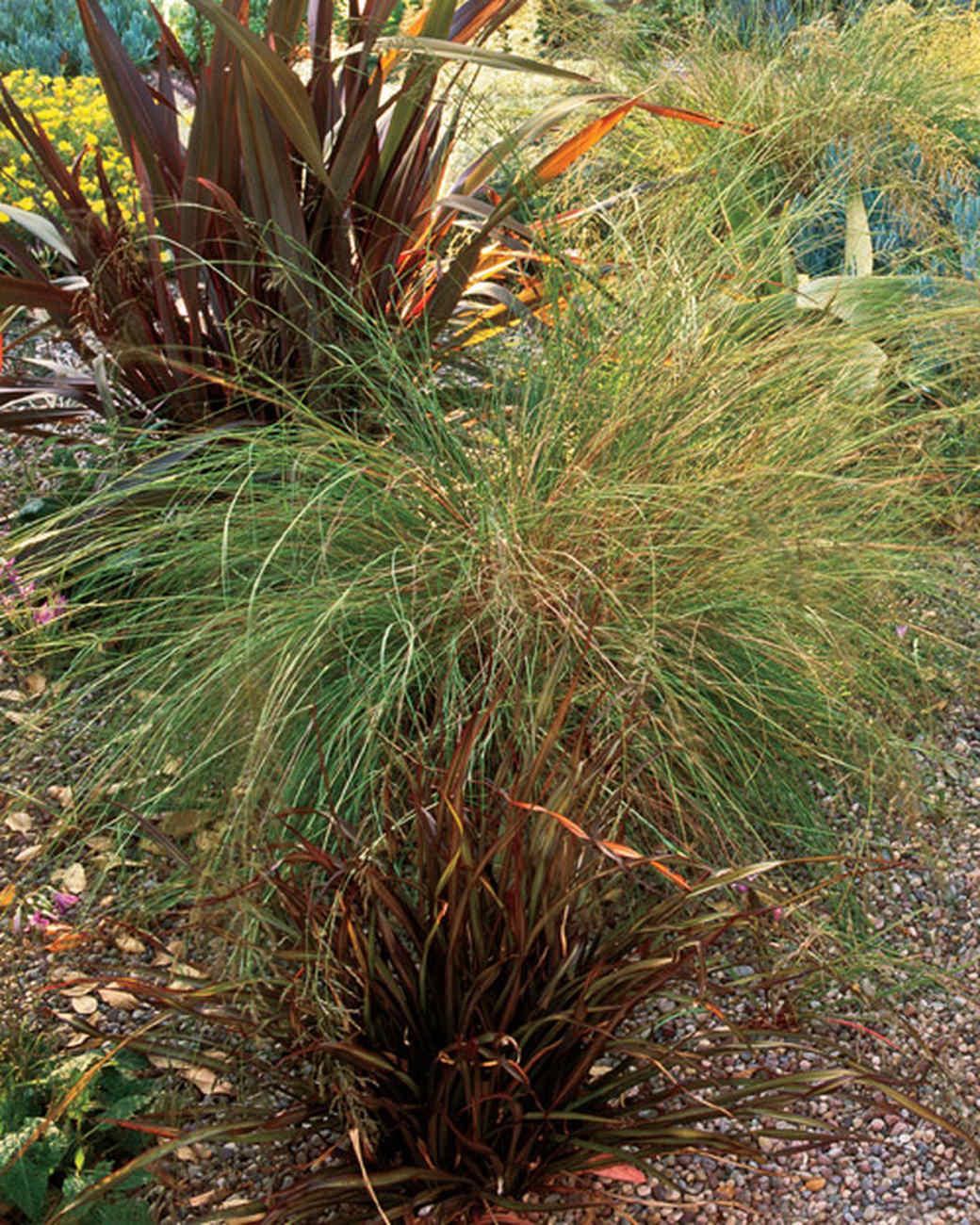 mla10490_0809_eragrostis_curvula.jpg