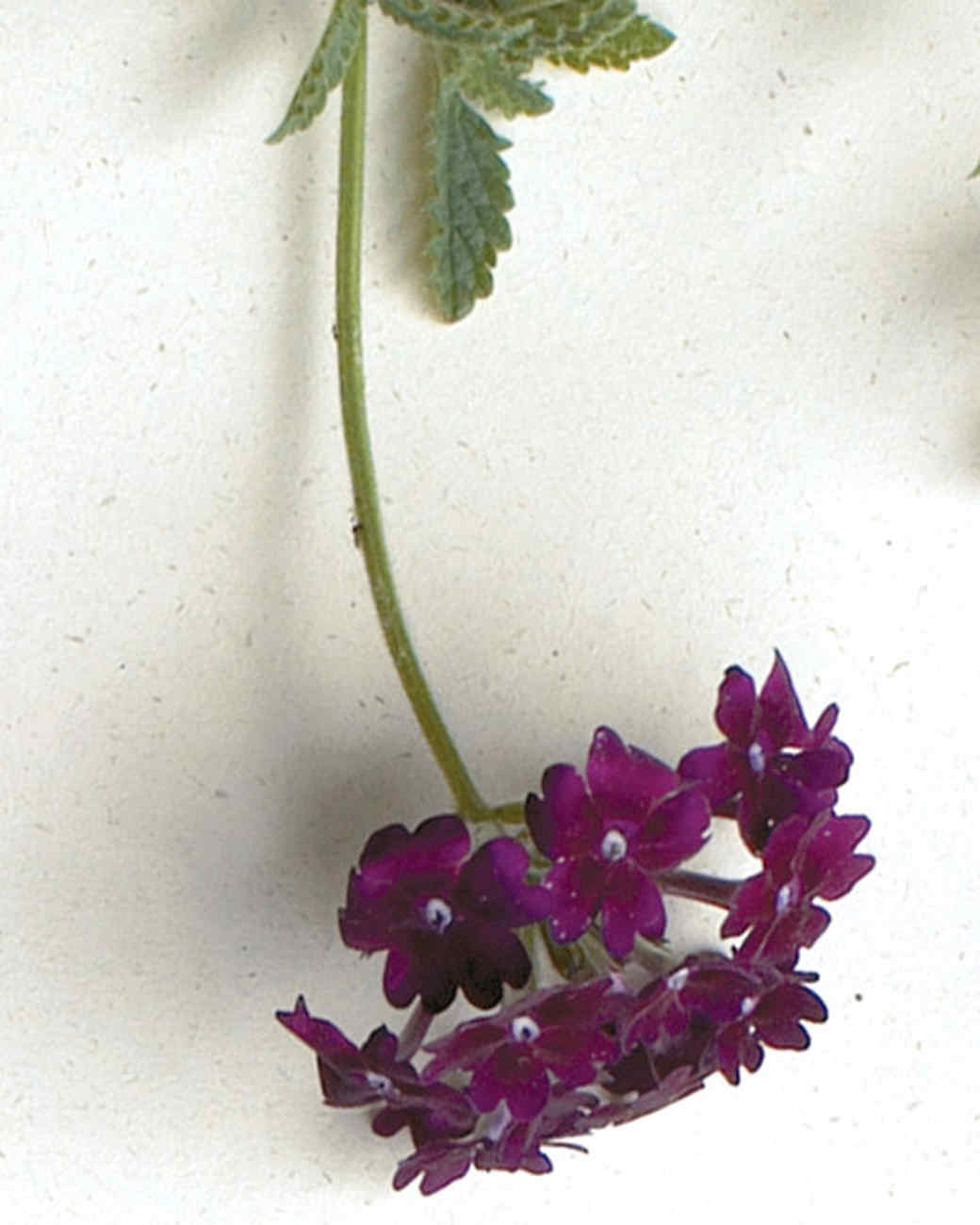 mld104318_0609_lanai_deep_purple.jpg