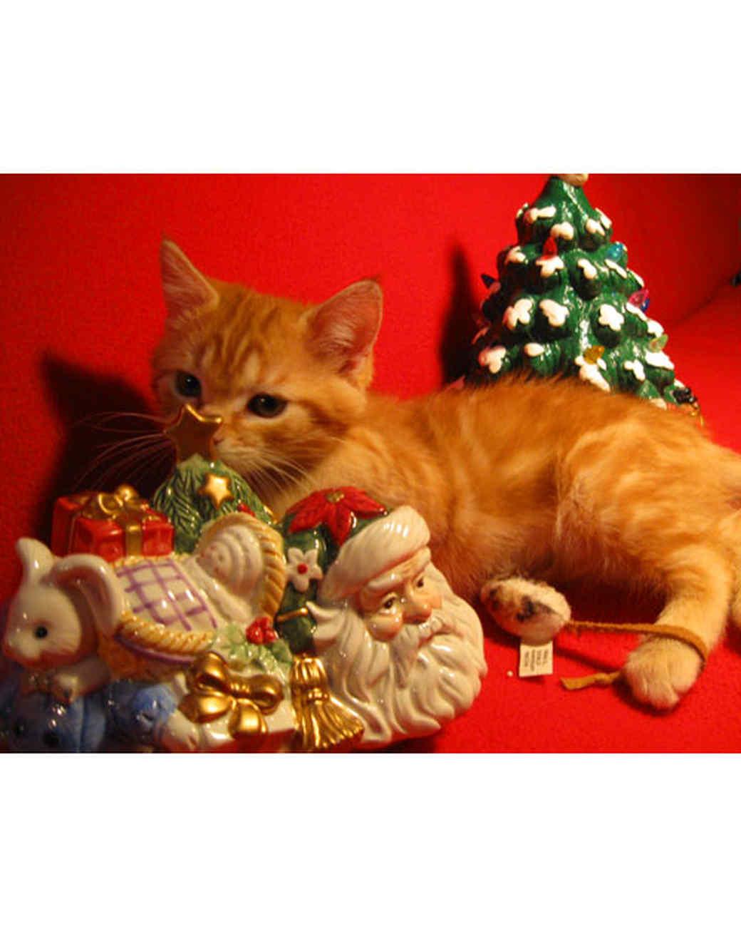 pets_ugc_santa_11566414_27673141.jpg