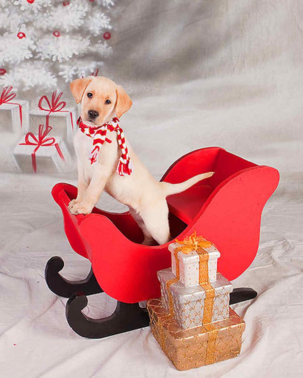 pets_ugc_santa_11661002_20988945.jpg