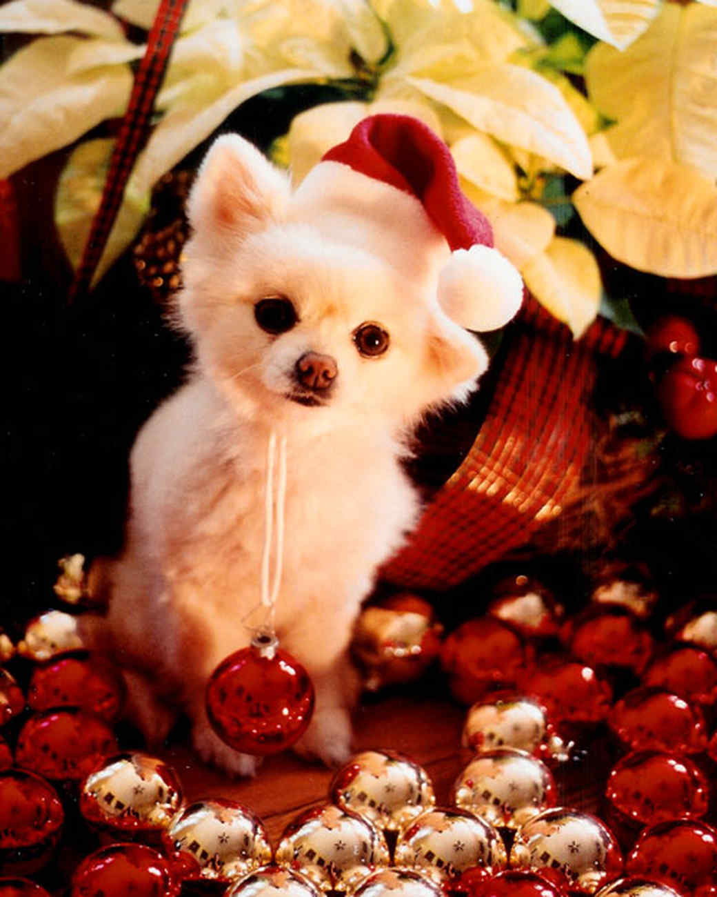 pets_ugc_santa_11664655_26478336.jpg