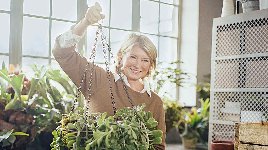 wire basket plant
