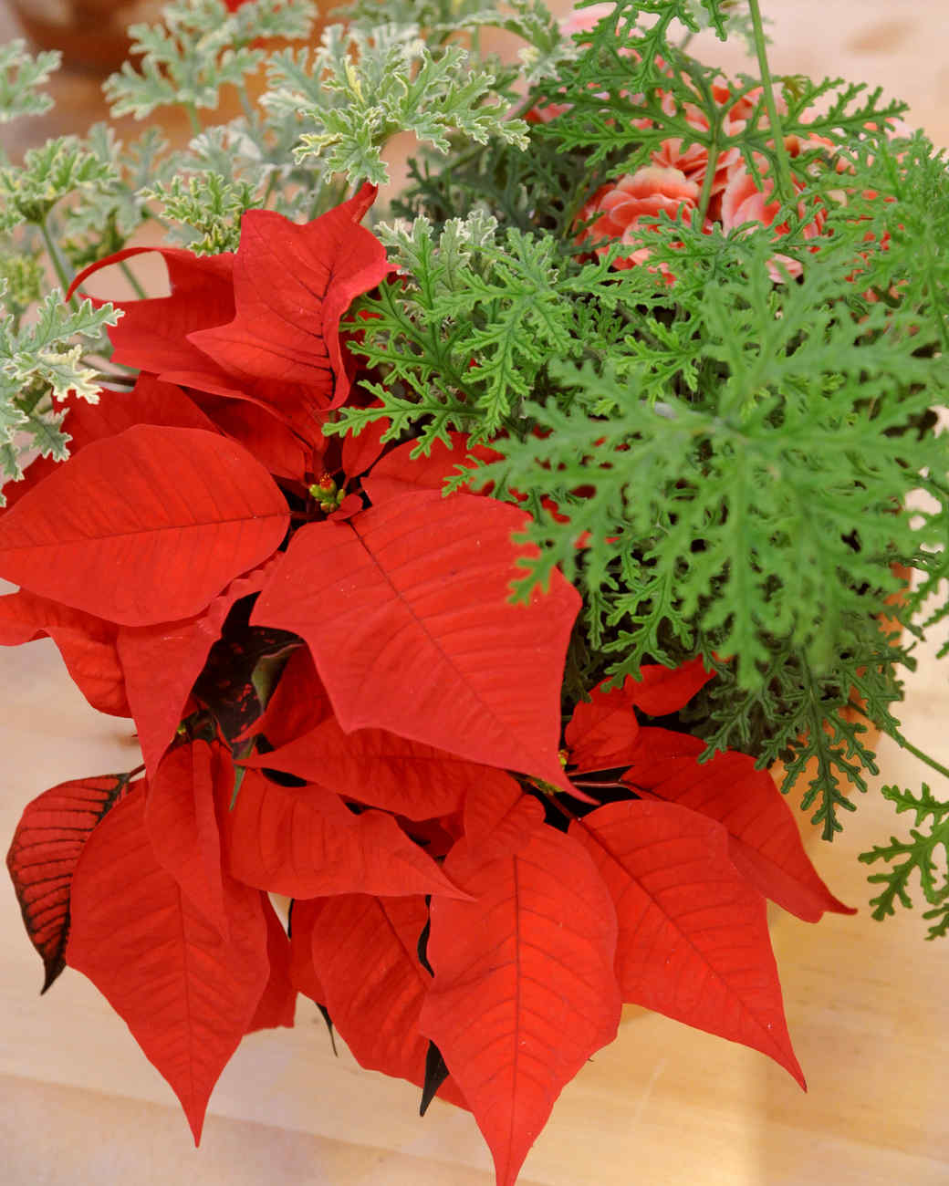 Poinsettia centerpiece video martha stewart for Poinsettia arrangements