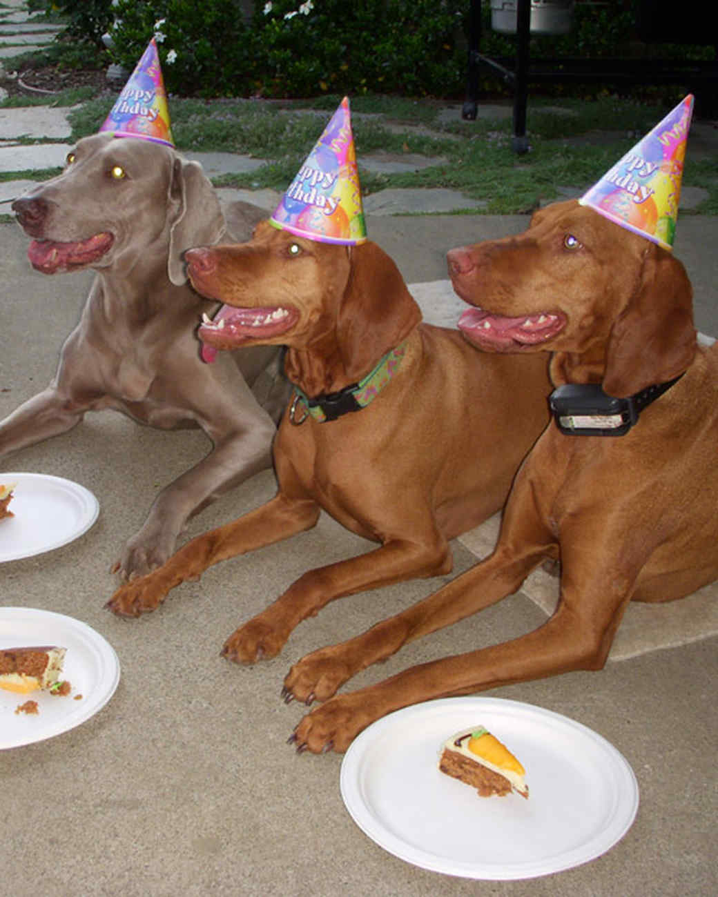 party_animals_photo_contest_86827.jpg