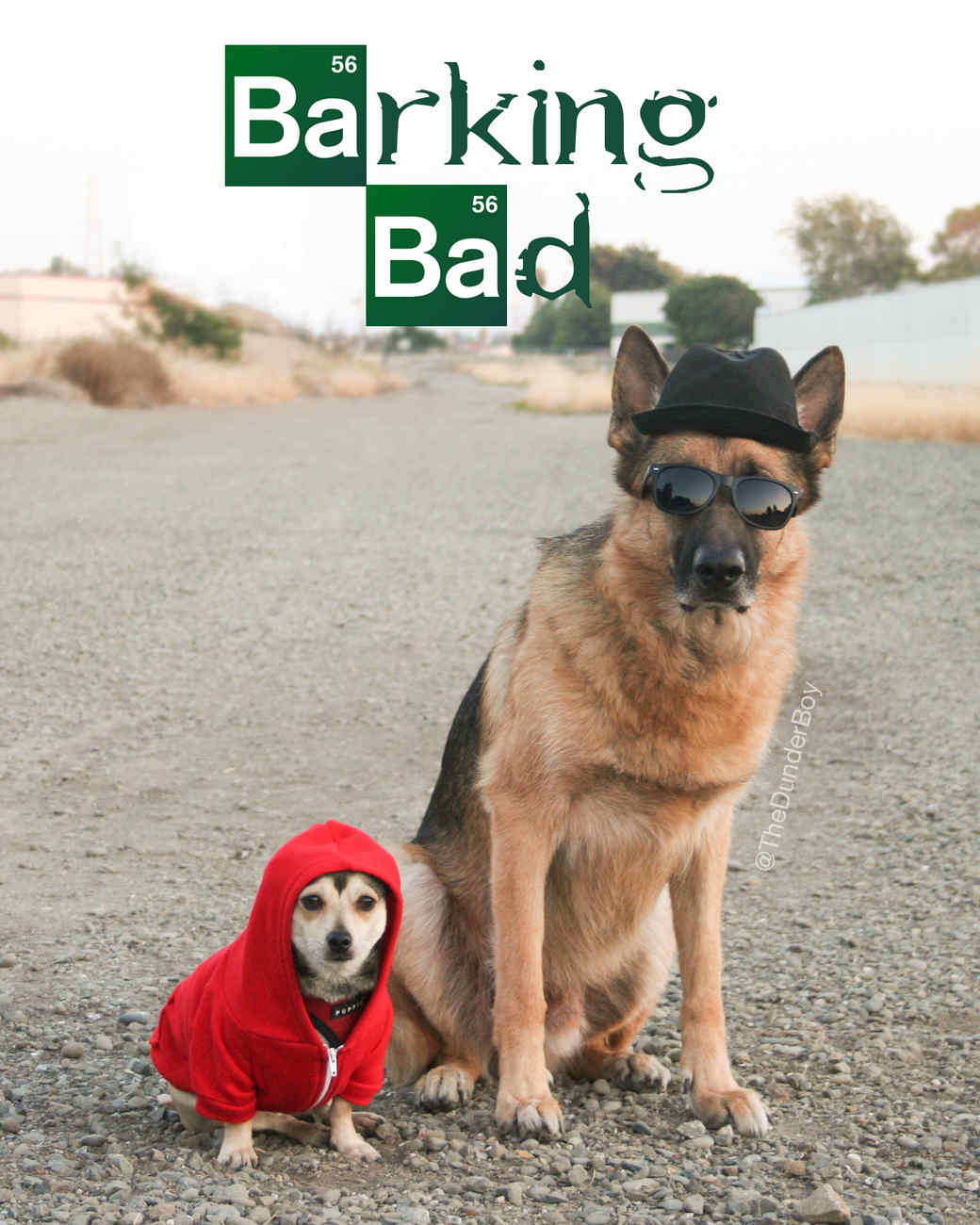 barking-bad-halloween-thedunderboy.jpg