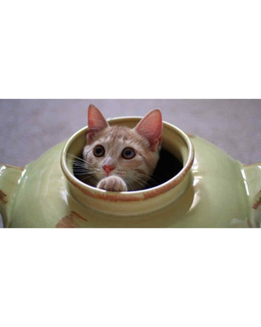pets_kittens_0610_9482639_11162285.jpg