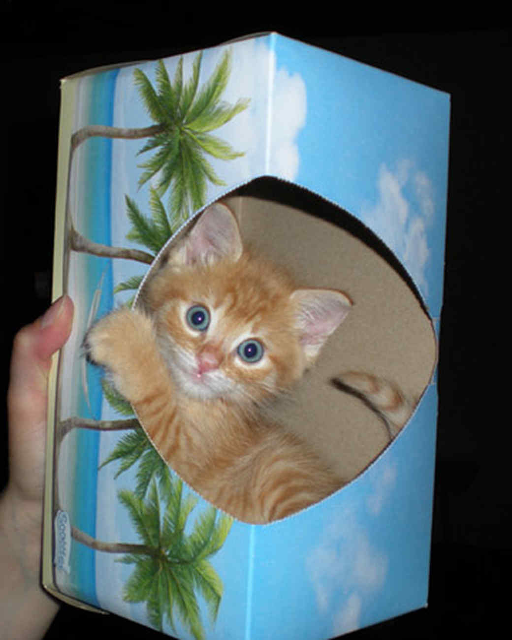 pets_kittens_0610_9497075_23524611.jpg