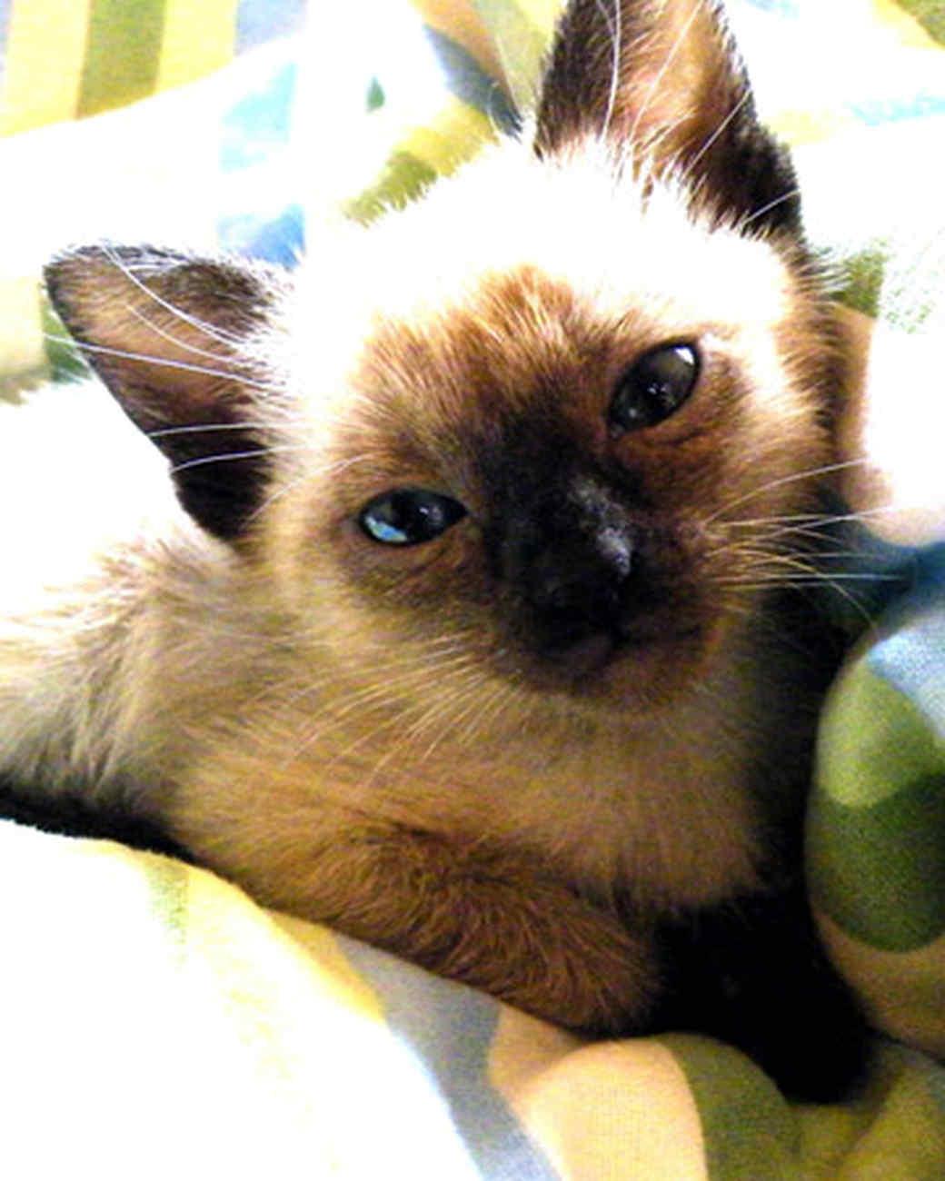 pets_kittens_0610_9534064_11798607.jpg