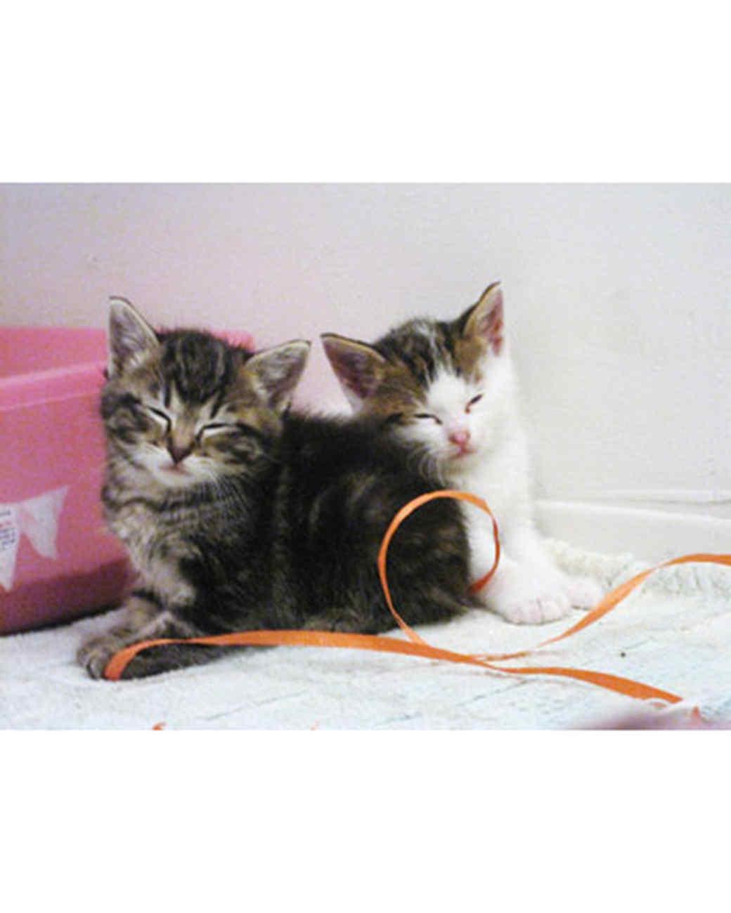 pets_kittens_0610_9551943_18320430.jpg