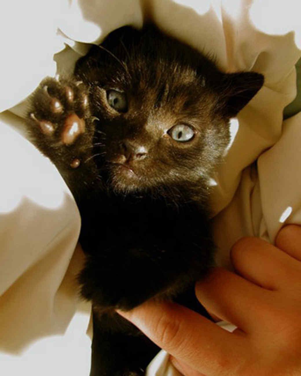 pets_kittens_0610_9608078_23733078.jpg