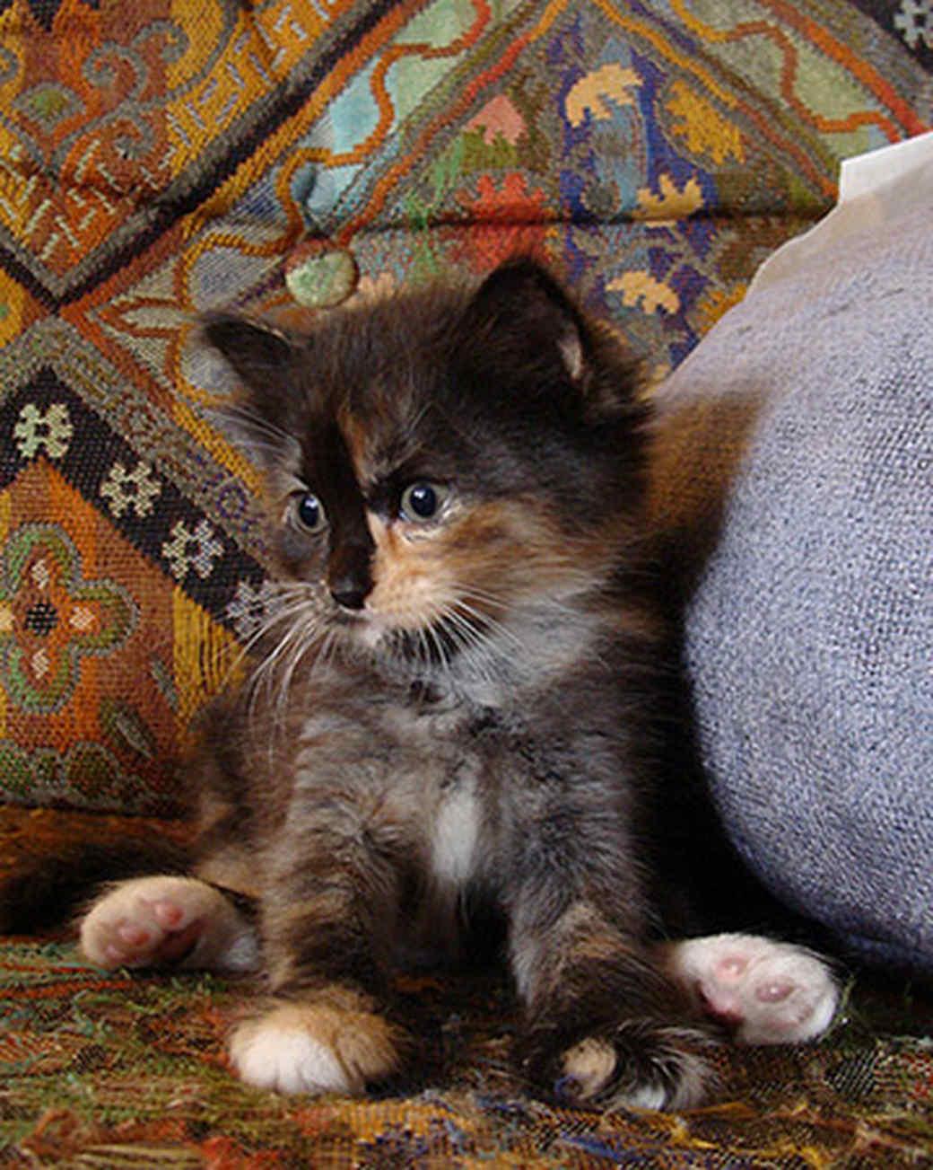 pets_kittens_0610_9675339_11289143.jpg
