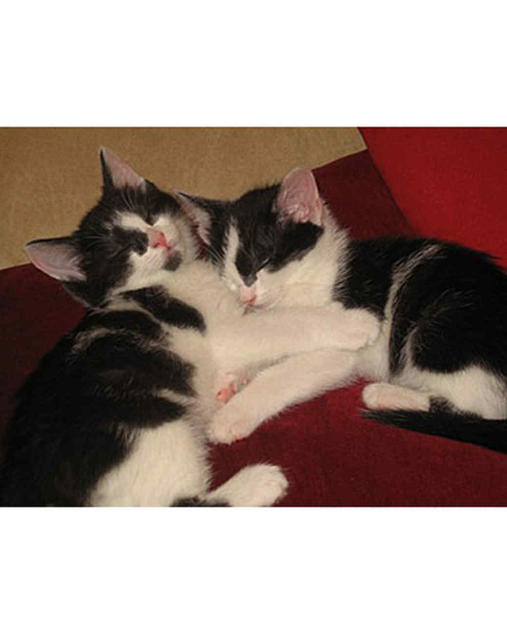 pets_kittens_0710_9483588_19015552.jpg
