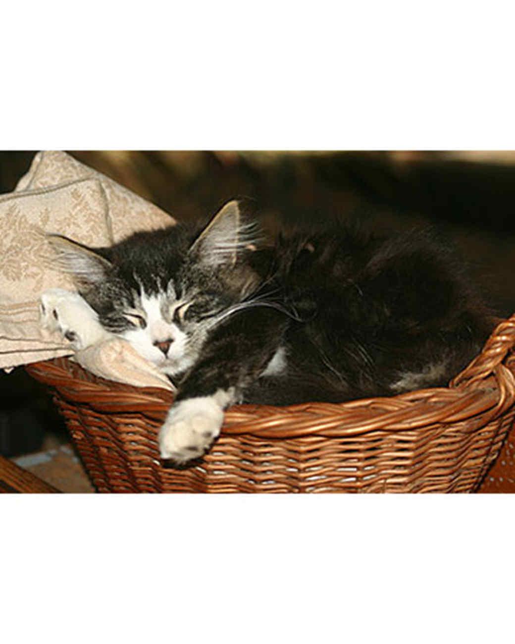 pets_kittens_0710_9517300_23562986.jpg