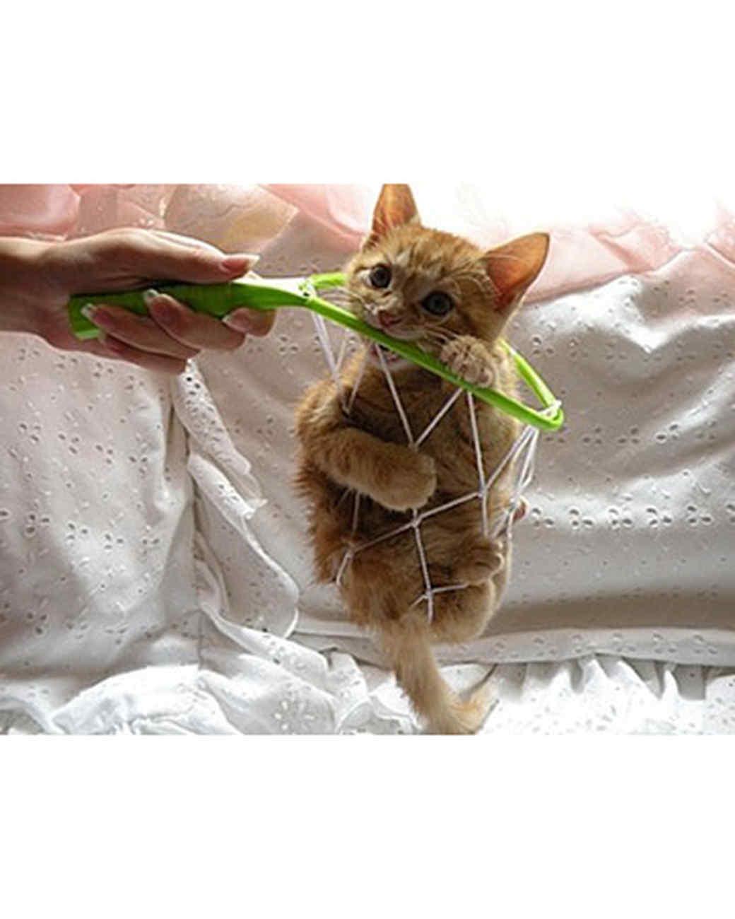 pets_kittens_0710_9781026_11976447.jpg