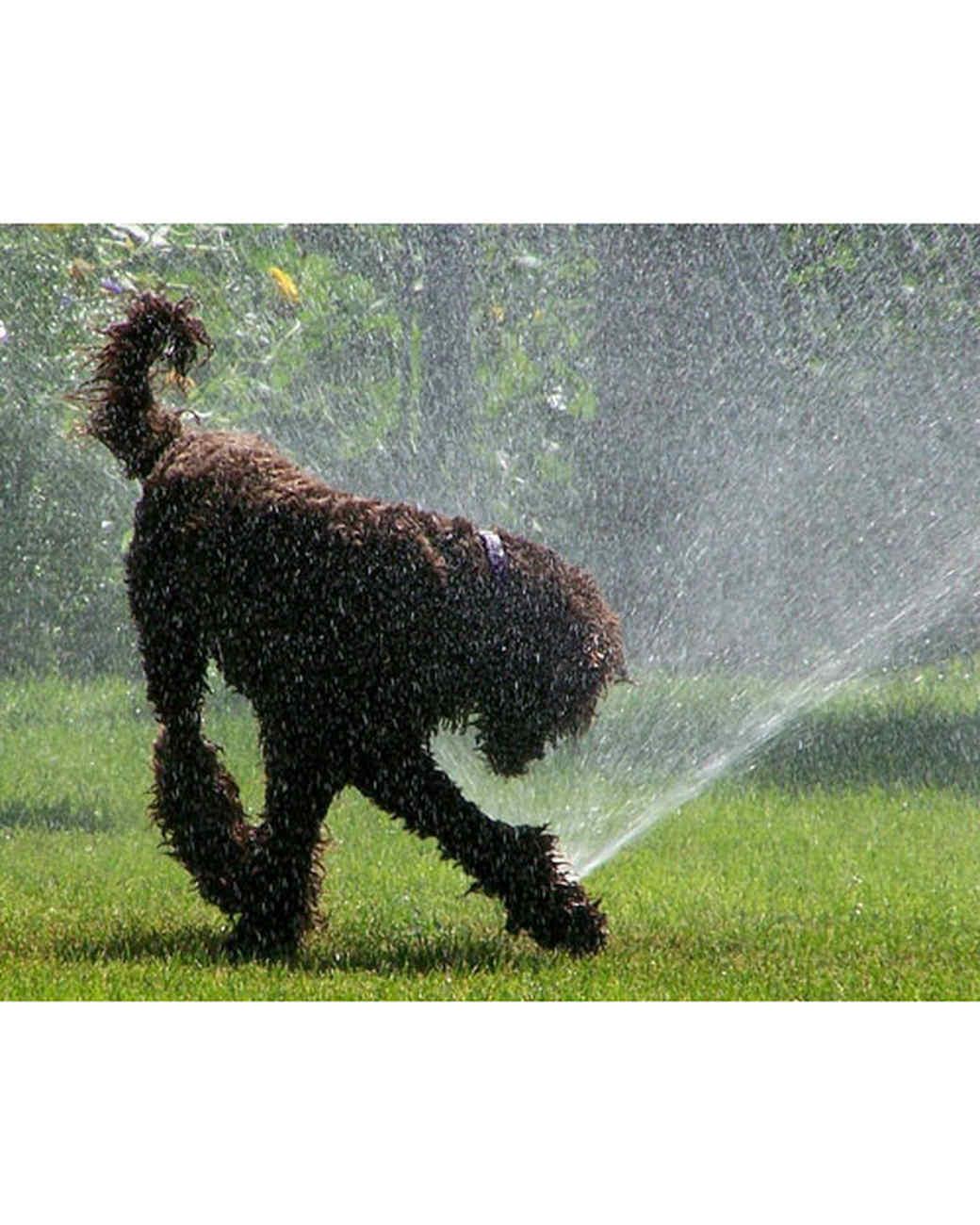 pets-at-play-0311-12957027_30573434.jpg