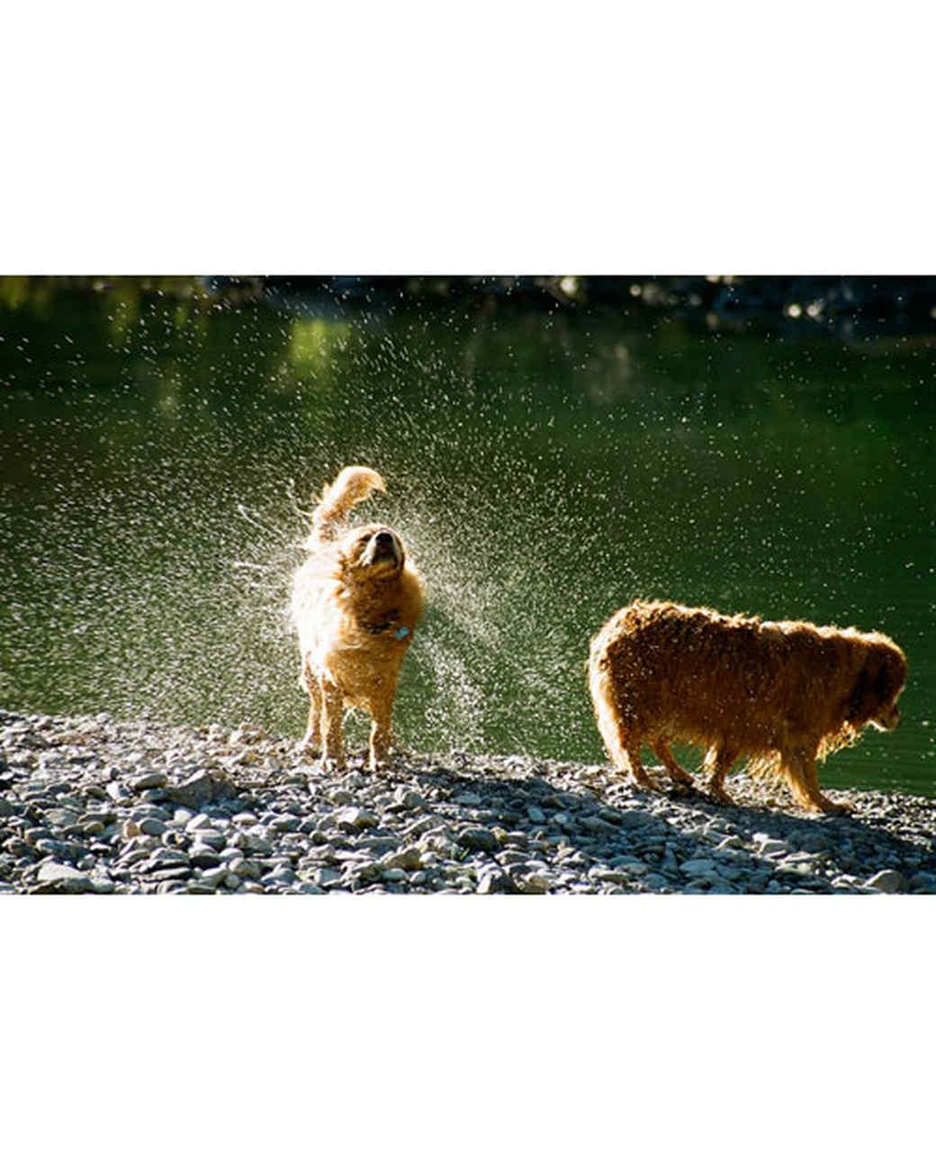 pets-at-play-0311-13055951_27657598.jpg