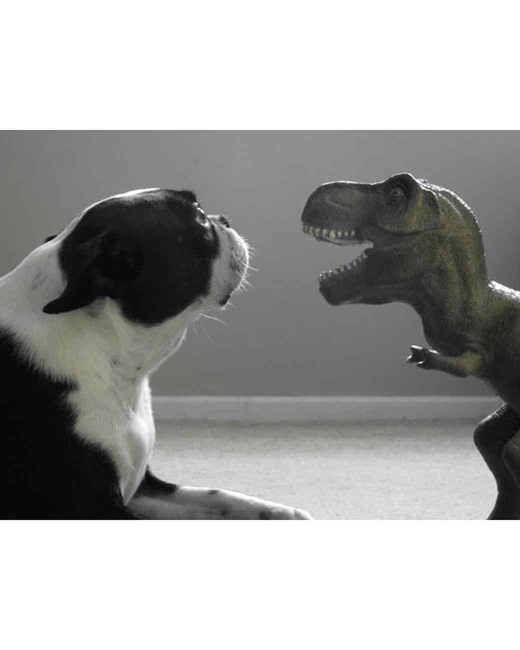 pets-at-play-0311-13096527_30827315.jpg