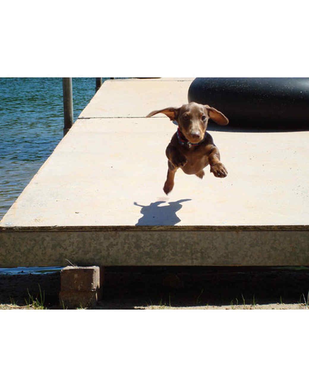 pets-at-play-0311-13128326_30893268.jpg