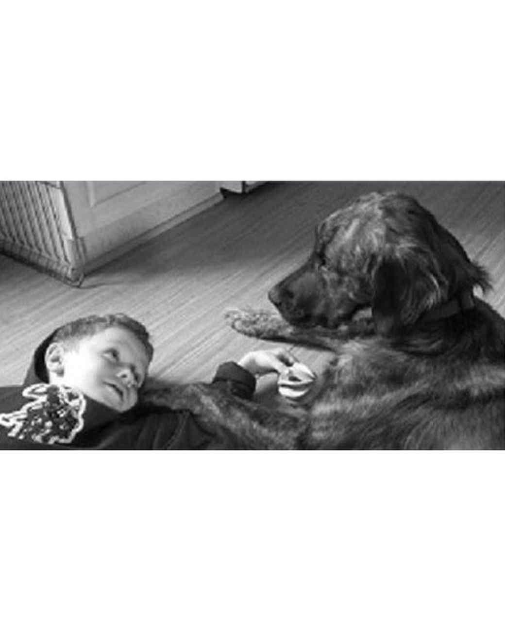 pets-at-play-0311-13130037_30896814.jpg