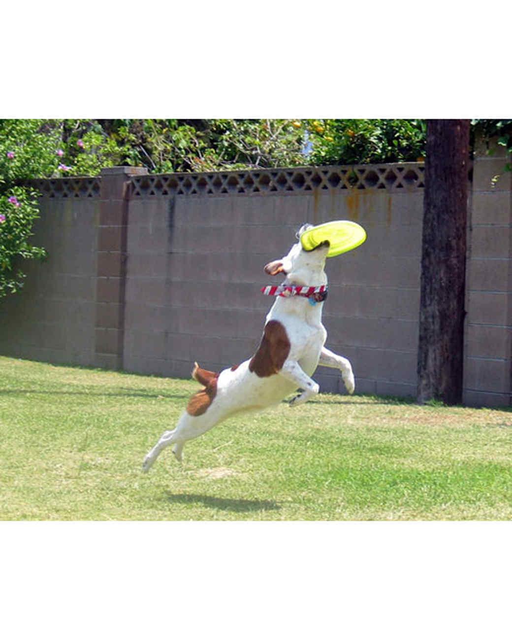 pets-at-play-0311-13133820_13798630.jpg