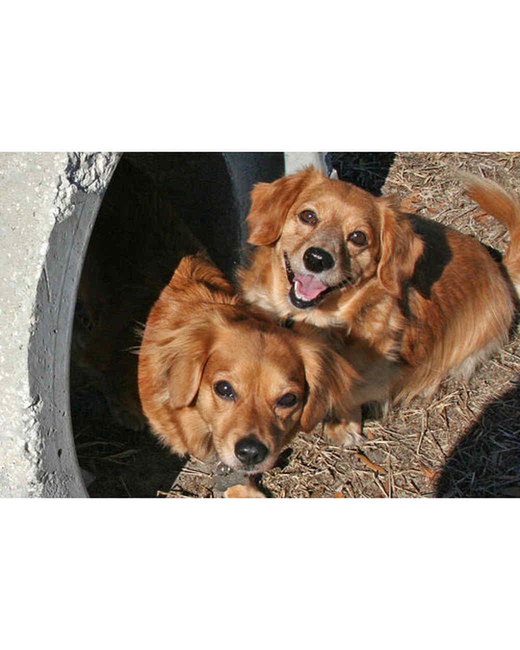 pets-at-play-0311-13138043_26054964.jpg