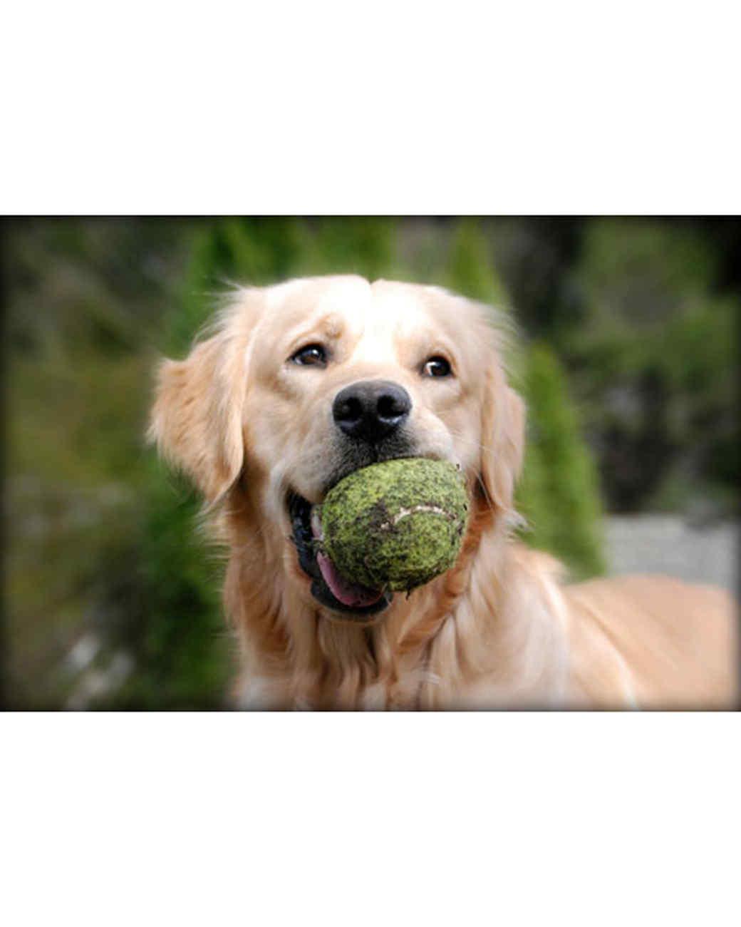 pets-at-play-0311-13149125_20898761.jpg