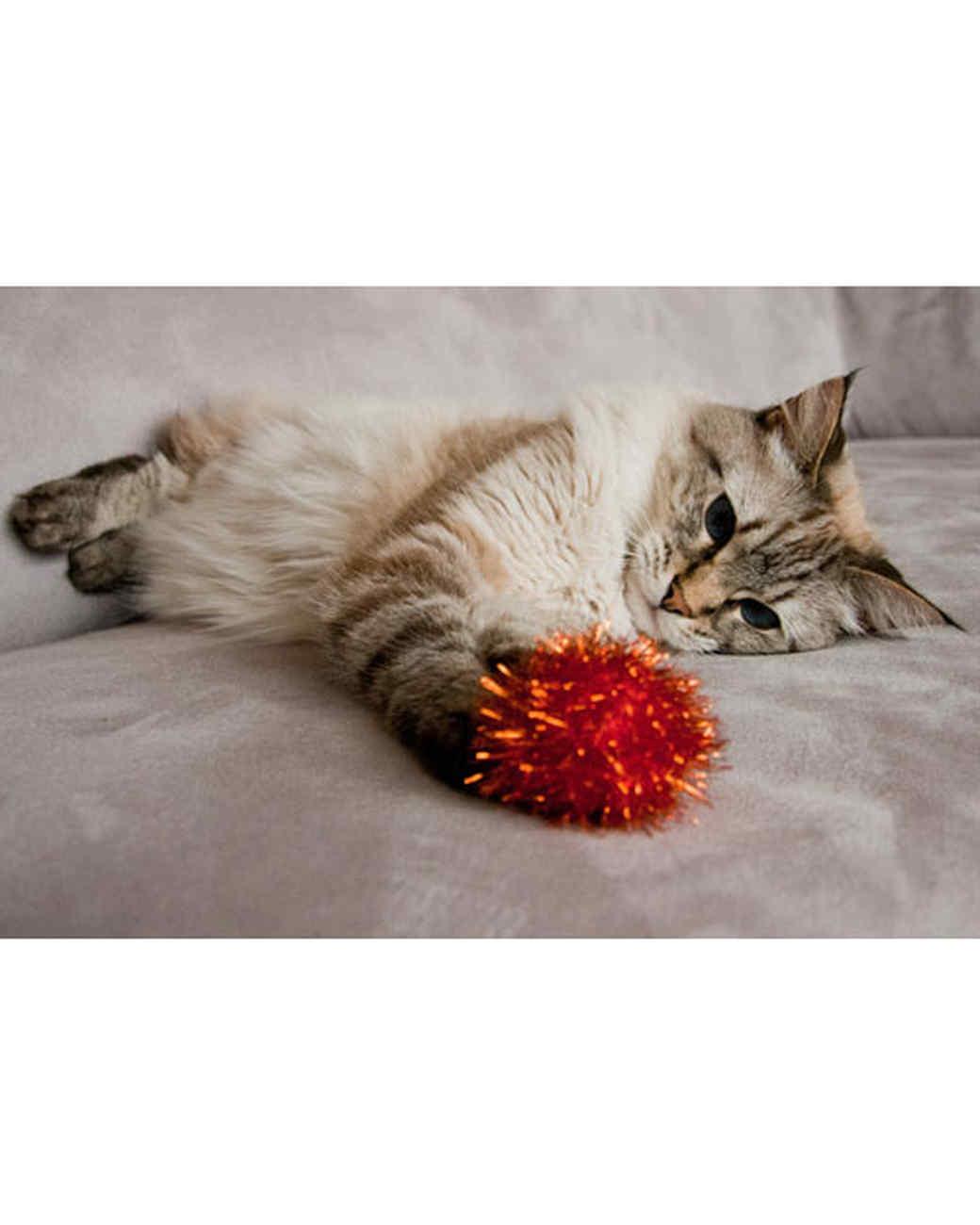 pets-at-play-0311-13165721_18309412.jpg