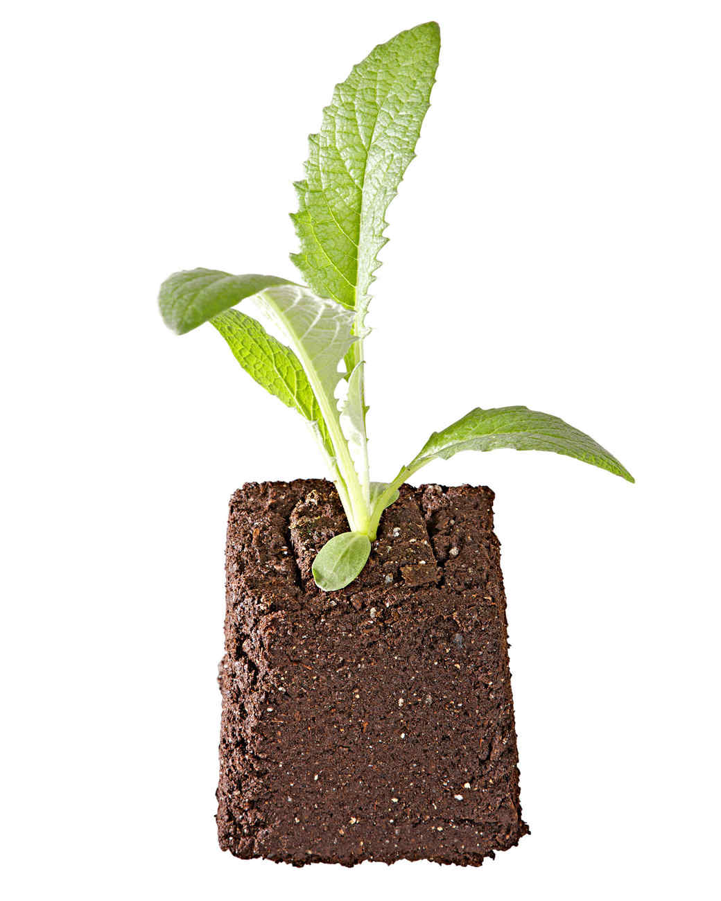 soil block plant grow