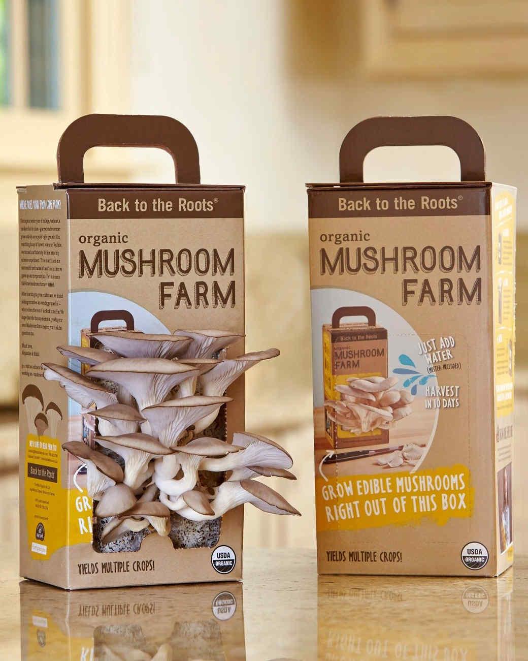 back-to-the-roots-mushroom-farm-1114.jpg