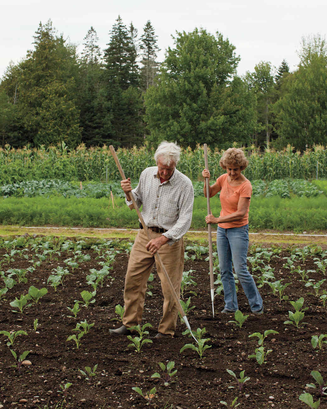 four-seasons-farm-gardening-md107849.jpg