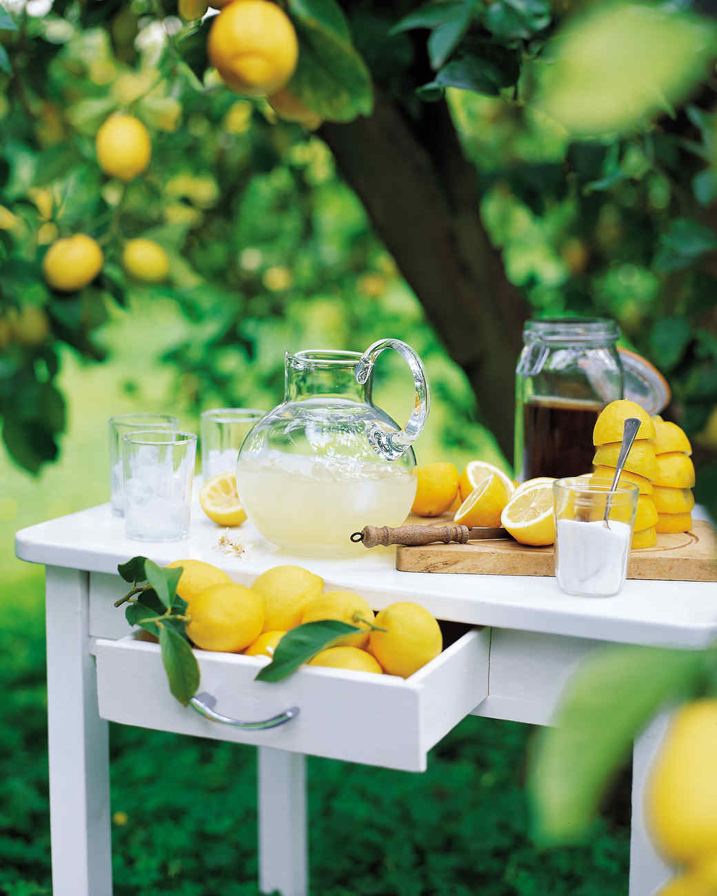 Meyer-Verbena Lemonade