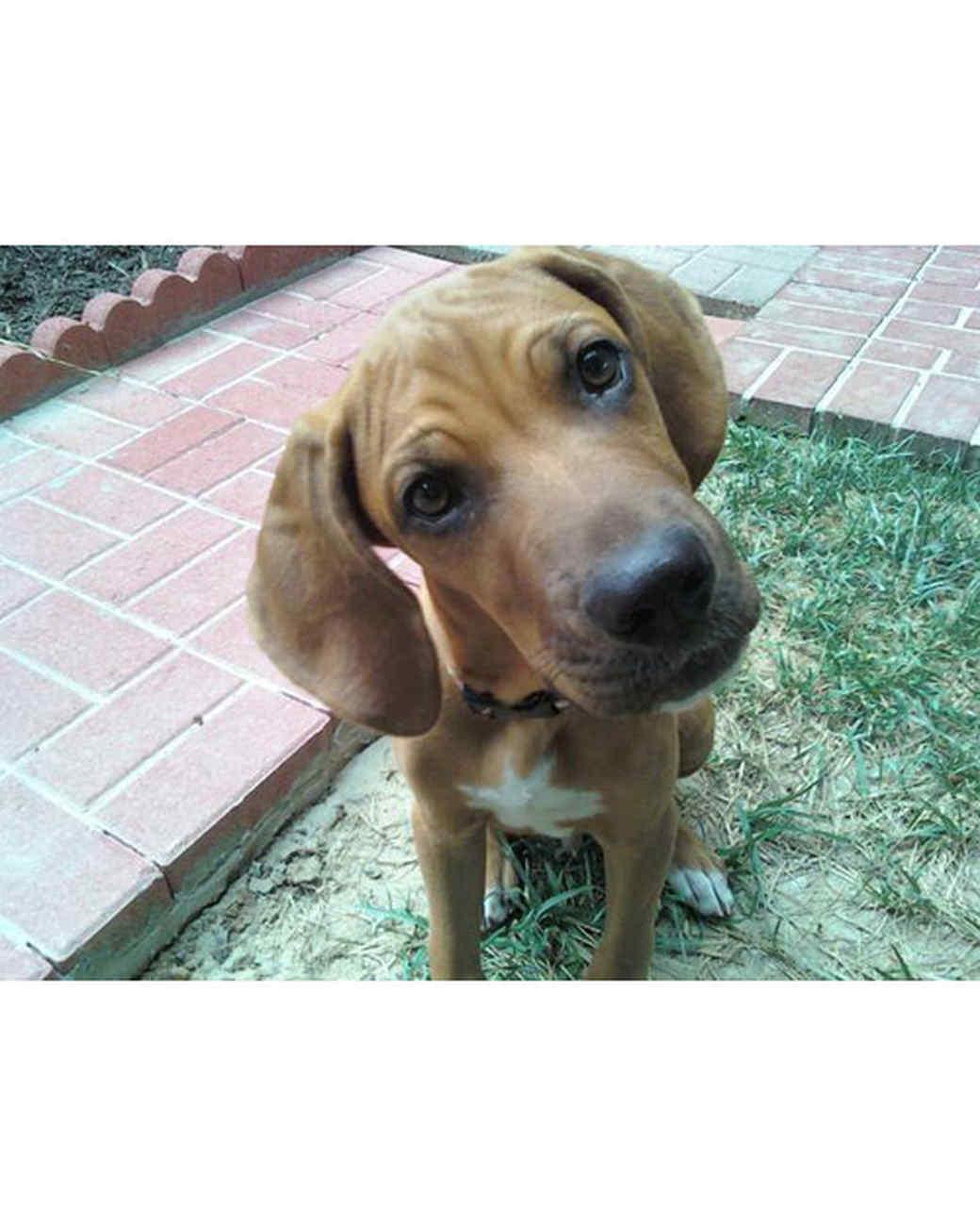 pets_adoption_6462851_122717_16557129.jpg