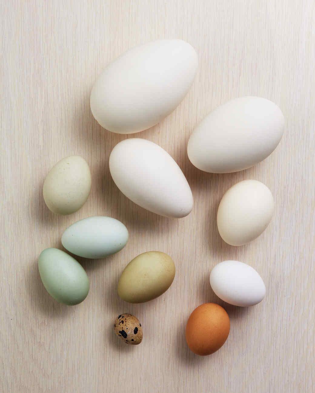 egg-dyeing-app-d107182-eggglossary0414.jpg