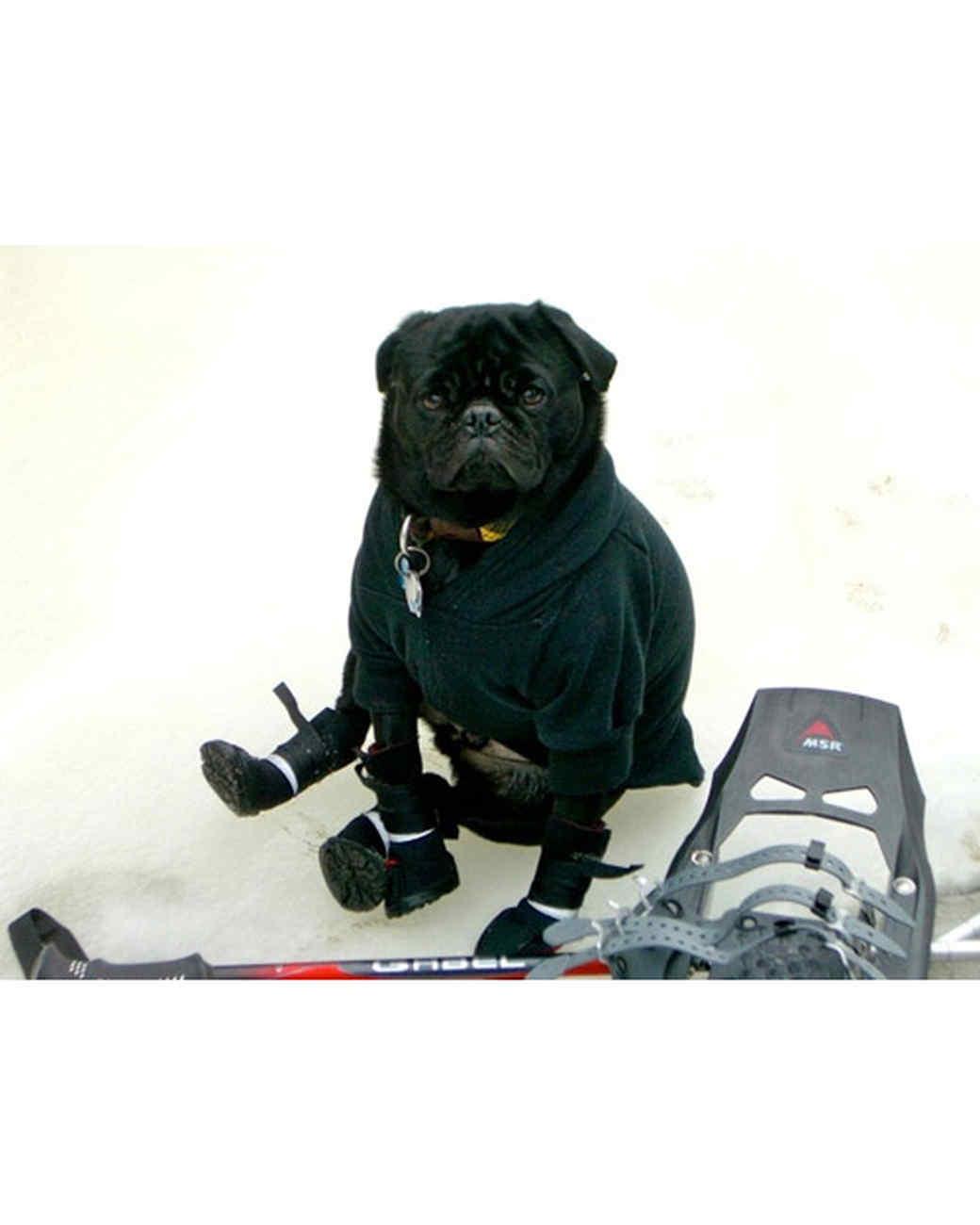 pets_snowangels_7004462_122717_18788028.jpg
