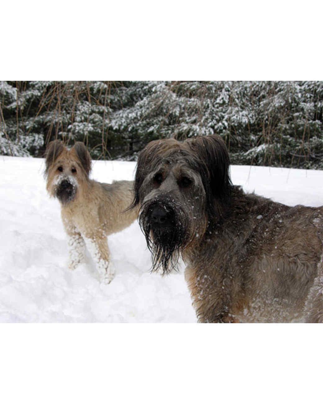 pets_snowangels_7041220_122717_18889507.jpg