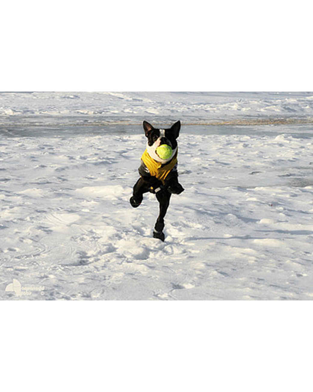pets_snowangels_7205691_122717_19075669.jpg