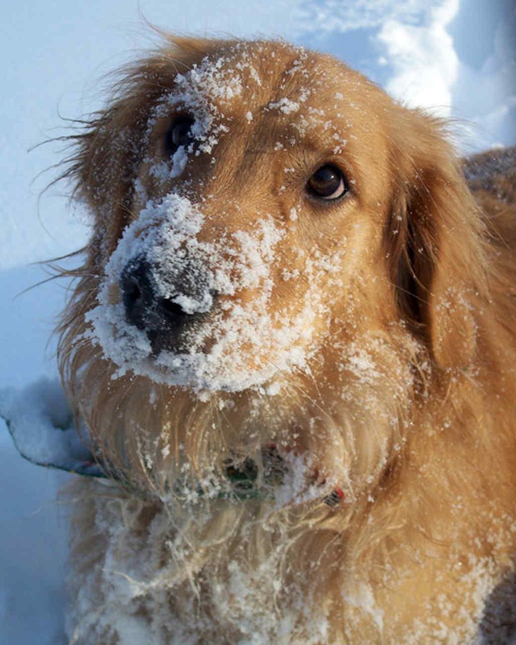 pets_snowangels_7255532_122717_11375759.jpg