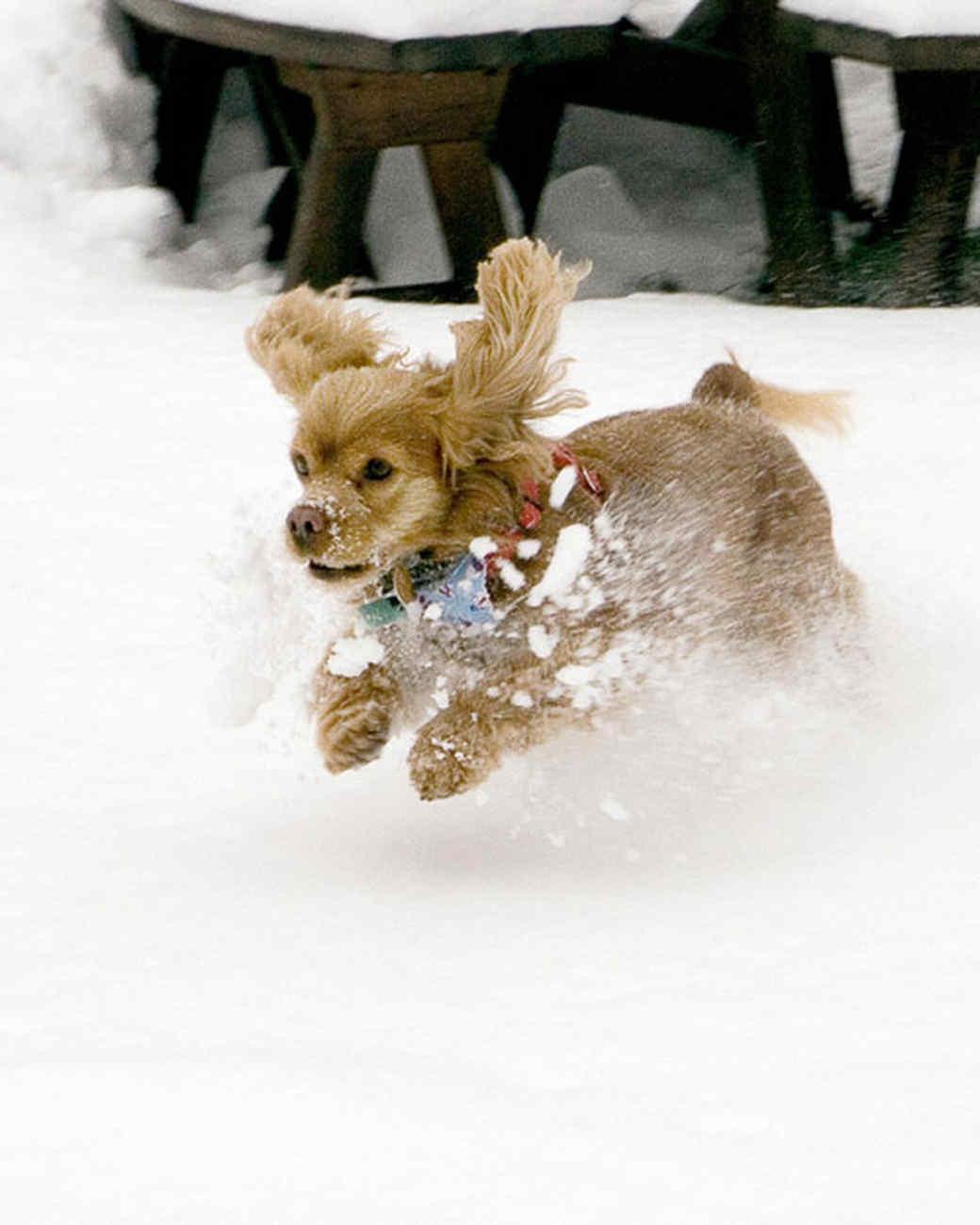 pets_snowangels_7319485_122717_19256160.jpg
