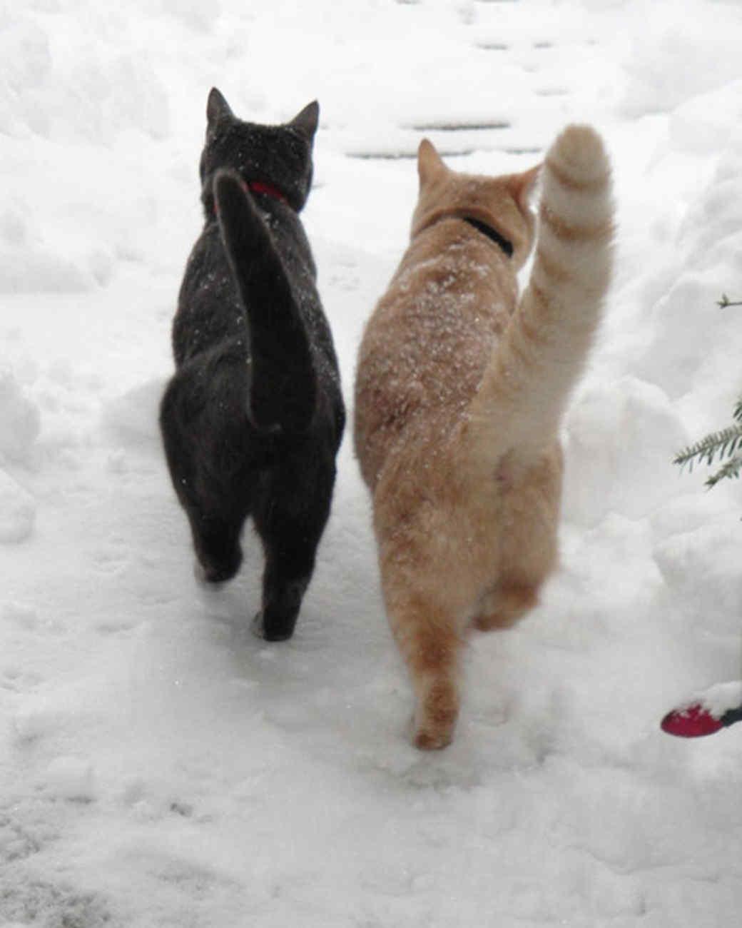 pets_snowangels_7334253_122717_19295698.jpg