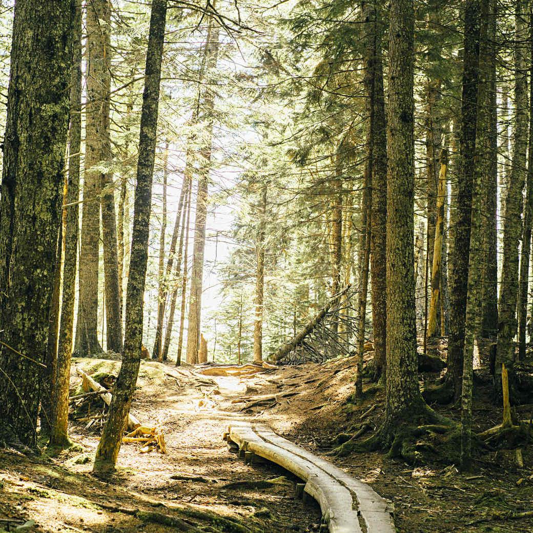 acadia national park trail hike
