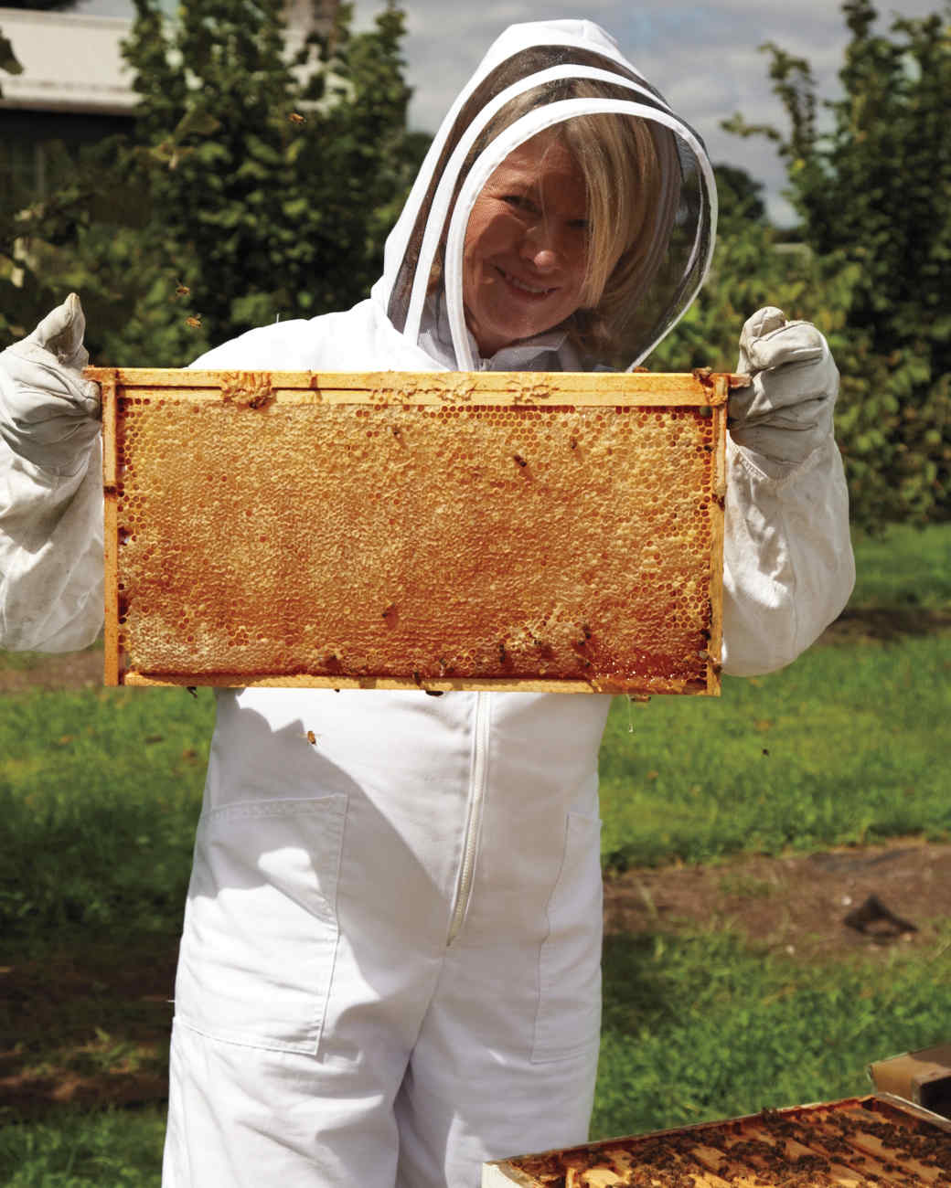 hive-maintenance-6-ms-column-0688-mld106618.jpg